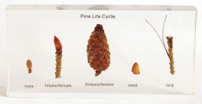 Life Cycle Science, Item Number 1288614