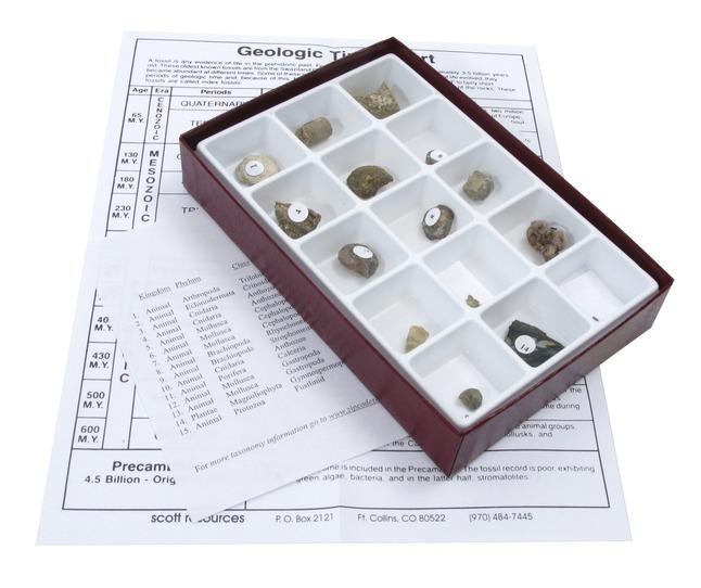 Fossils, Geologic Time, Item Number 1293008