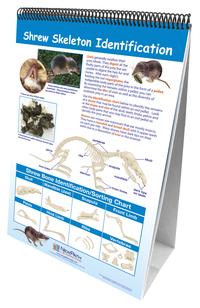 Zoology, Entomology, Item Number 1361607