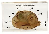 Dissection Alternatives, Item Number 1368366