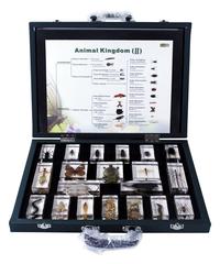 Preserved Specimen, Item Number 1368367