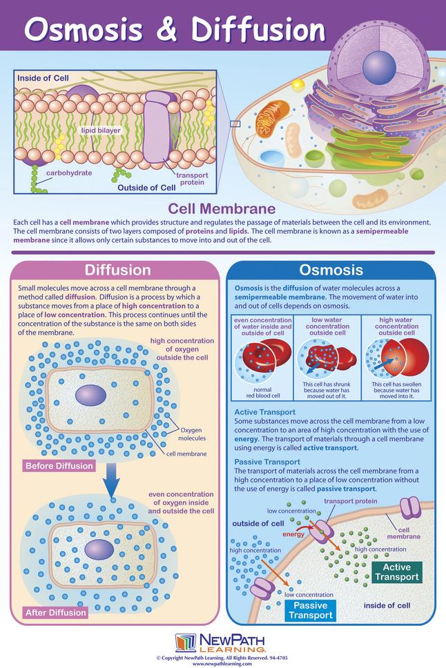 Cell Biology, Item Number 1413692