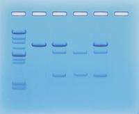 Biotechnology, Item Number 1437199