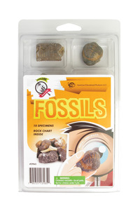 Fossils, Dinosaurs, Item Number 2005729