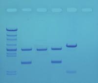 Biotechnology, Item Number 1490699