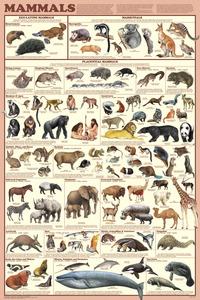 Science Animal Studies, Item Number 1499048