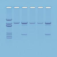 Biotechnology, Item Number 1500906