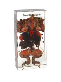 Dissection Alternatives, Item Number 1572922