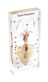Dissection Alternatives, Item Number 1572925