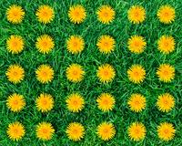 Carpets, Item Number 2003742
