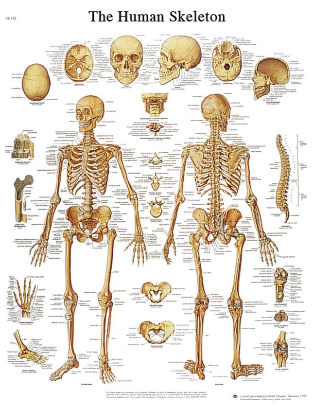 Biology Classification Studies, Item Number 2006776