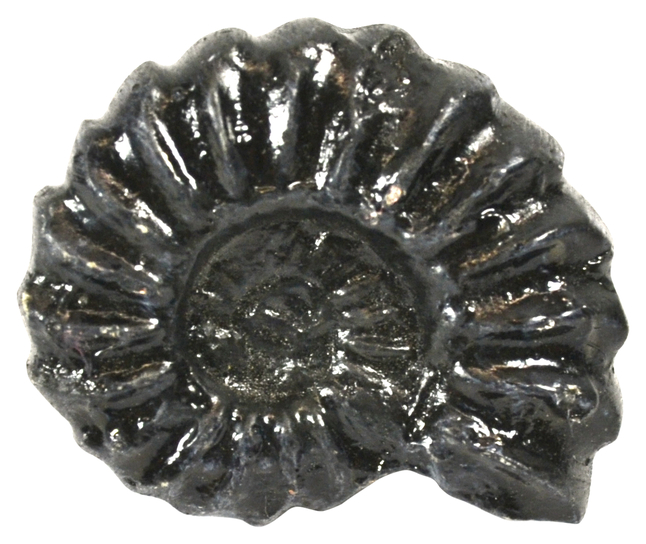 Fossils, Geologic Time, Item Number 2011748