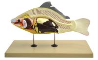 Zoology, Entomology, Item Number 2012068