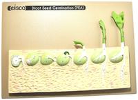 Plant Science, Item Number 2021821