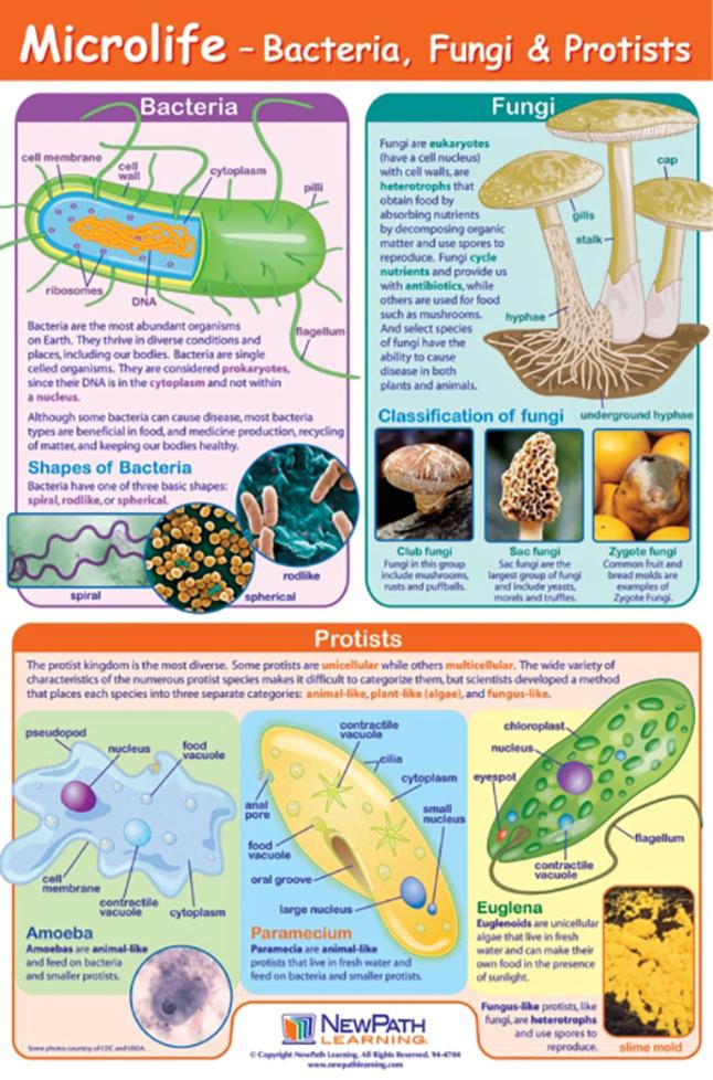 Microbology Supplies, Item Number 2026930