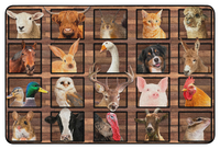 Animals, Nature Carpets And Rugs, Item Number 2027047