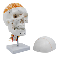 Lab and Anatomical Models, Item Number 2040021
