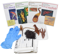 Image for Frey Choice Dissection Kit - Basic Zoology without Dissection Tools from School Specialty