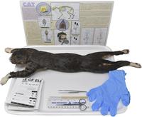 Preserved Specimen - Mammals, Item Number 2041238