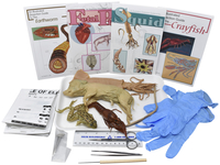 Image for Frey Choice Dissection Kit - Comparative Circulatory System with Dissection Tools from School Specialty