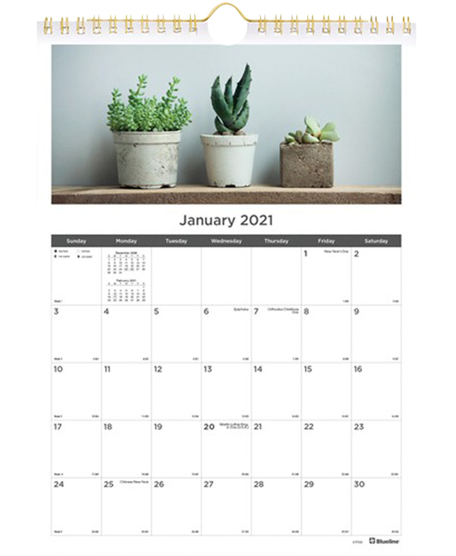 Image for Succulent Plants Wall Calendar Monthly from School Specialty