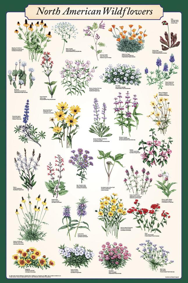 Plant Science, Item Number 529203