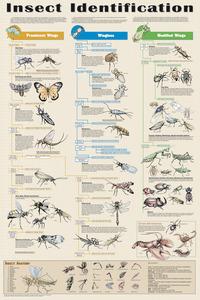 Zoology, Entomology, Item Number 529205