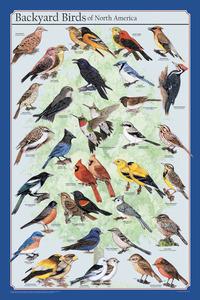 Zoology, Entomology, Item Number 529207