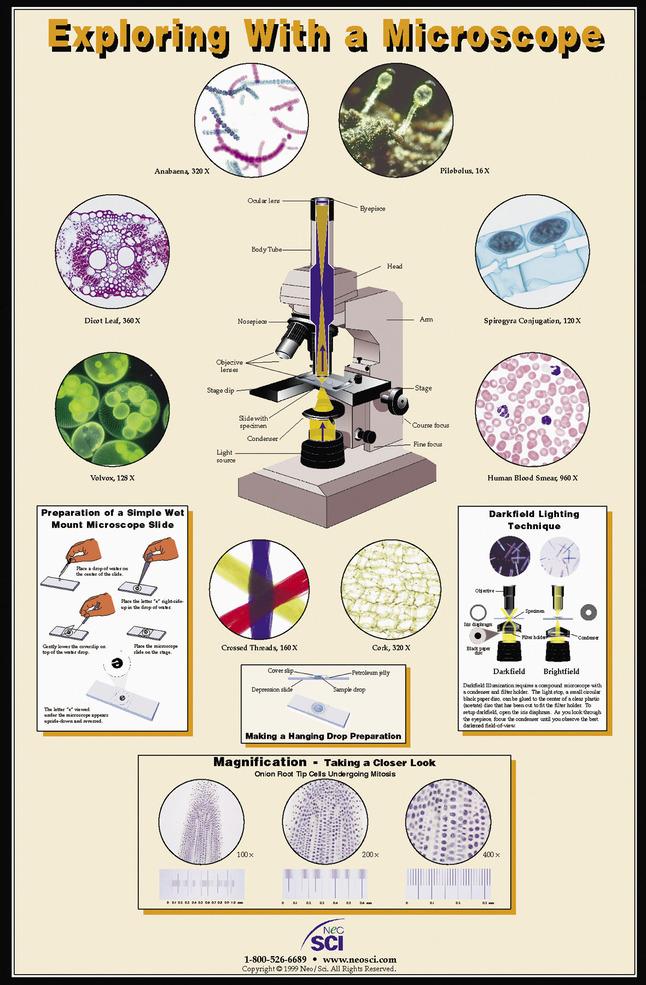 Microbology Supplies, Item Number 35-1006