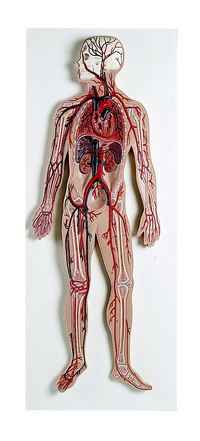 Anatomy & Physiology Books, Models Supplies, Item Number 577244