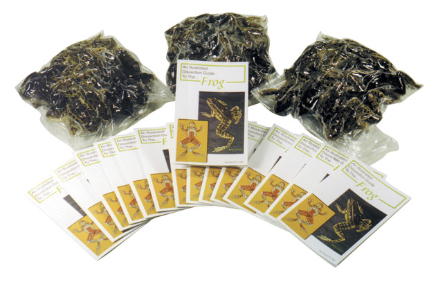 Non-Mammal Preserved Specimen, Item Number 588577