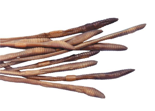 Non-Mammal Preserved Specimen, Item Number 596340