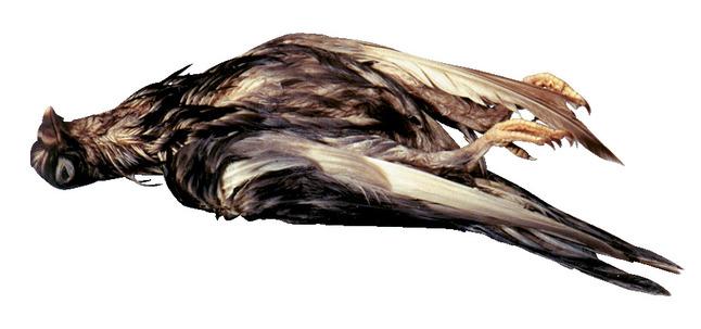 Non-Mammal Preserved Specimen, Item Number 597852