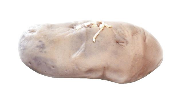 Preserved Specimen - Mammals, Item Number 596895