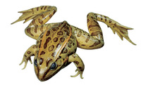 Non-Mammal Preserved Specimen, Item Number 572531