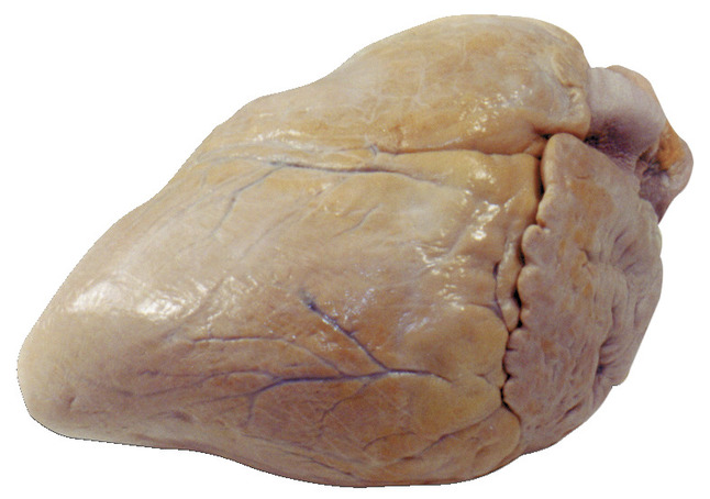Preserved Specimen - Mammals, Item Number 598017