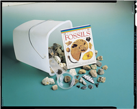 Fossils, Dinosaurs, Item Number 750-5035